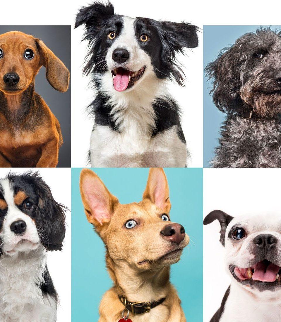 https://www.tvojastrolog.com/wp-content/uploads/2020/05/dogs-960x1098.jpg
