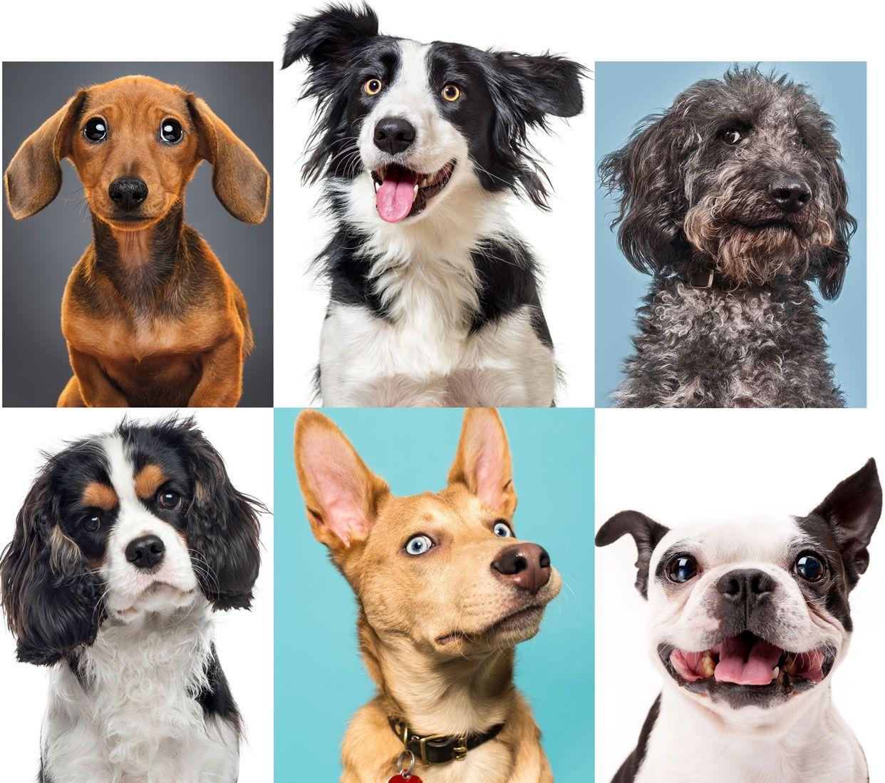 https://www.tvojastrolog.com/wp-content/uploads/2020/05/dogs.jpg